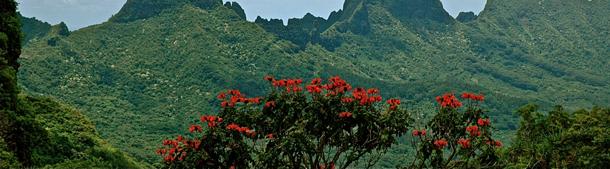 polynesia1_2
